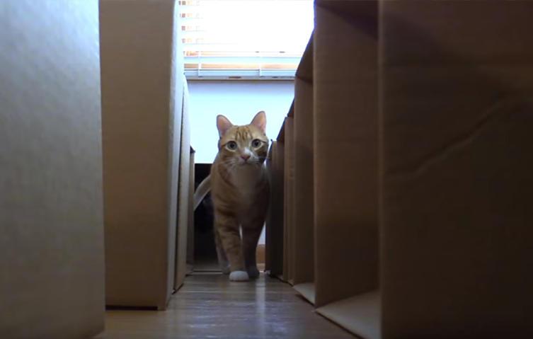 Fleißiges Herrchen bastelt Labyrinth aus 50 Kartons für seine Katzen