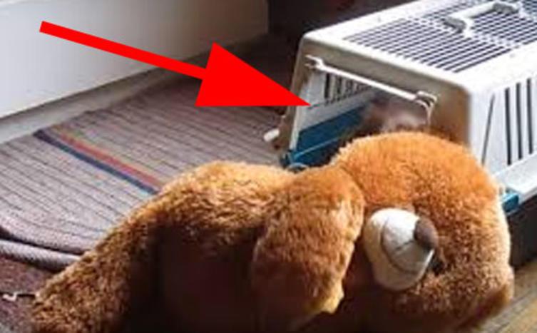Das ist mein Teddy – und den nehme ich auch mit ins Bett!