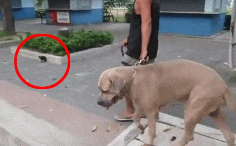 """Ein Hund """"greift"""" eine Babykatze an und wird sofort bestraft"""