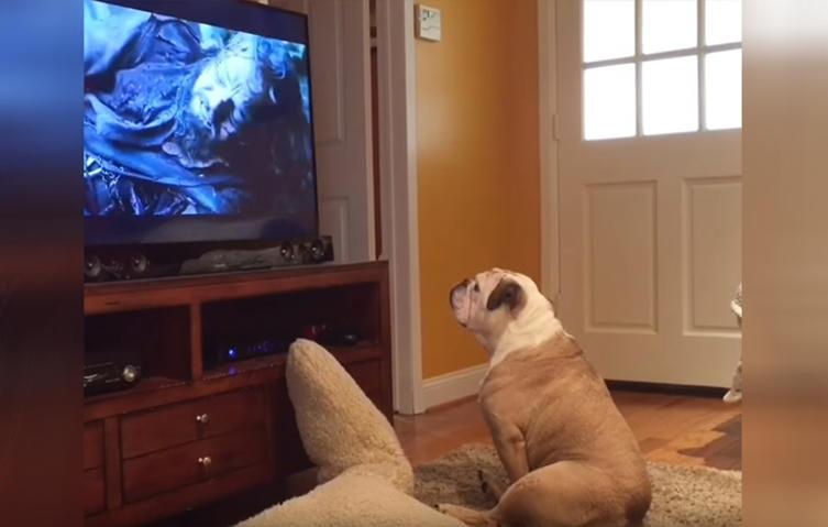 Bulldogge versucht, Leonardo Di Caprio vor Bärenattacke zu beschützen