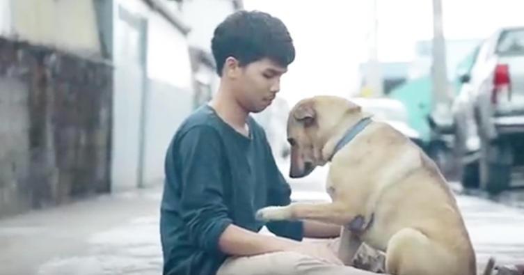 Die erste Umarmung! Dieser Mann schenkt ungeliebten Hunden Zuneigung
