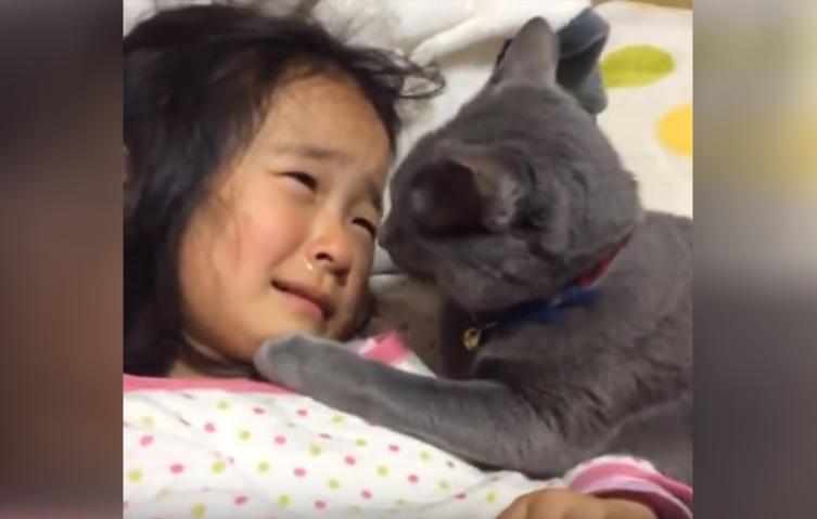 So rührend kümmert sich eine Katze um ein weinendes Kind