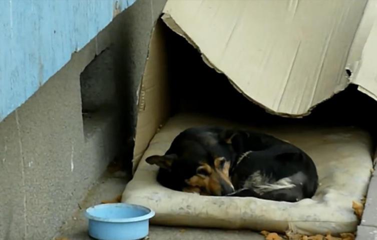 Dieser Hund lebte in einem Karton auf der Straße – doch dann geschah das