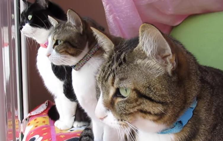 Witzige Szene: Drei Katzen unterhalten sich über Vögel