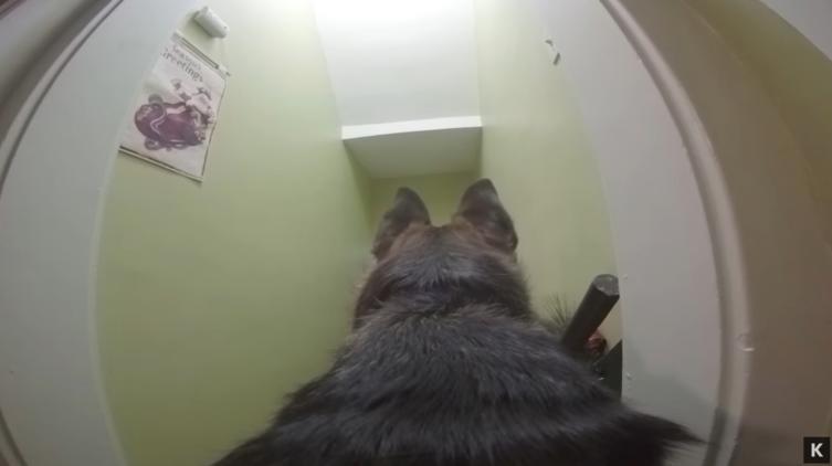 Was treibt eigentlich mein Hund, wenn er alleine zu Hause ist?
