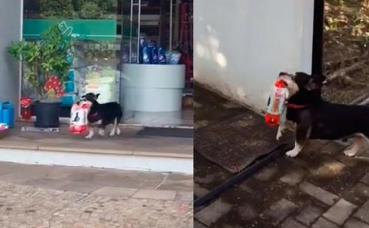 Dieser Hund kauft sich sein Futter – ganz allein!