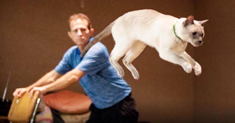 Mit diesem Sprung will eine Siamkatze einen neuen Rekord aufstellen