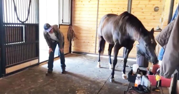 """Das ist das erste richtige """"Yogi-Pferd"""" der Welt"""