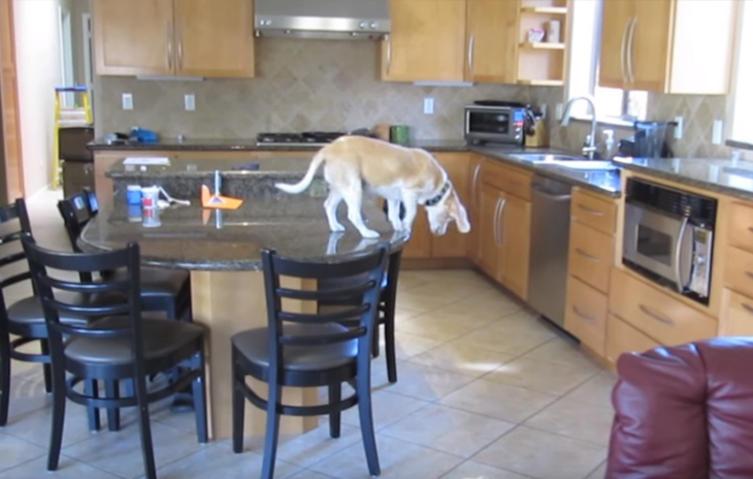 Was Beagles tun, wenn wir nicht zu Hause sind…