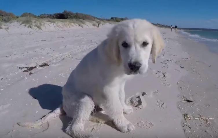 Welpe gräbt Loch am Strand – doch dann kommt die Welle