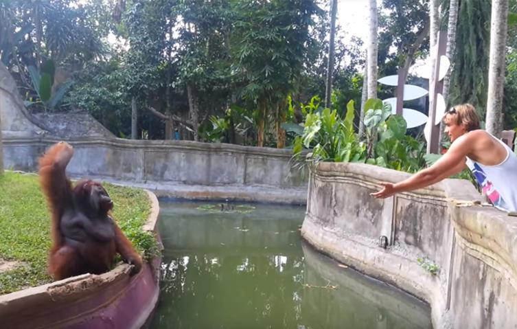 """""""Fairer Tausch"""": Affe bekommt Leckerli zugeworfen und tauscht dafür seine Banane ein"""