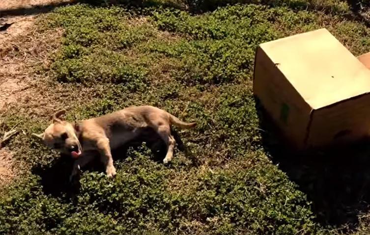 Fahrradfahrer findet verlassenen Hundewelpen – jetzt hat er ein neues Zuhause!