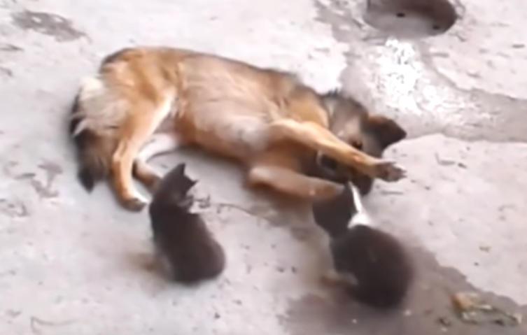 Rührend: Katze zeigt ihrem alten Hundefreund ihre kleinen Babys