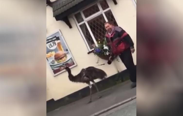 Dieser Mann geht ernsthaft mit einem Emu spazieren!