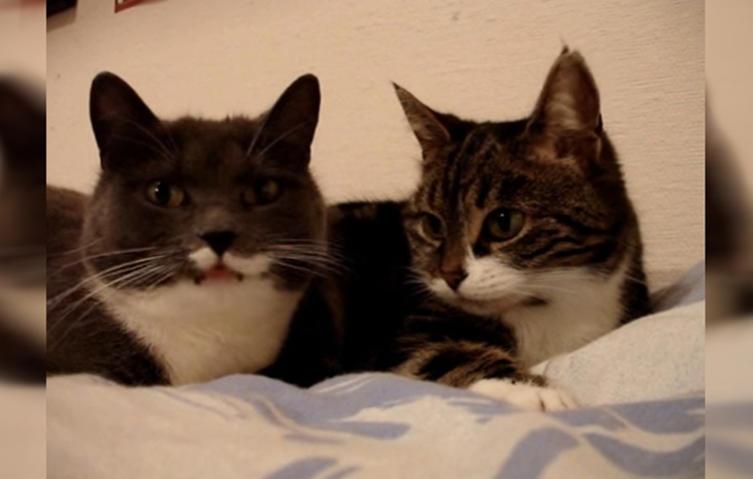 Dieses Kultvideo solltet ihr nicht verpassen: Zwei Katzen beim Kaffeeklatsch