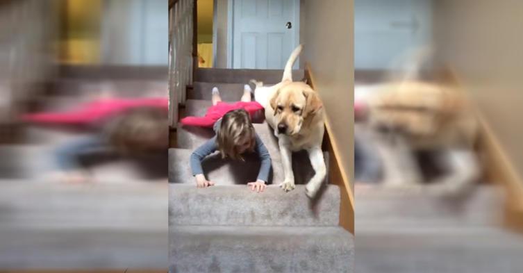 Mädchen vs Hund: Wer rutscht schneller die Treppe herunter?