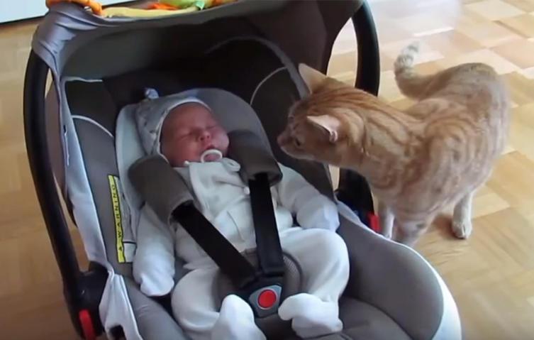 Einzigartiger Moment: Wenn die Katze zum ersten Mal auf ein Baby trifft