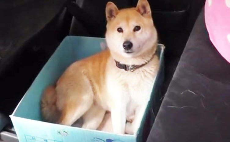Dieser schlaue Hund passt in jeden Karton, egal wie klein oder groß