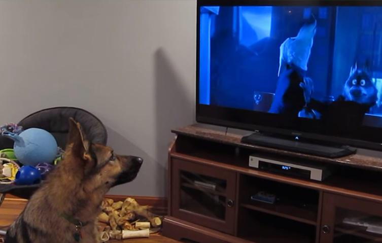 Geniale Szene: Schäferhund heult bei Disney-Film los