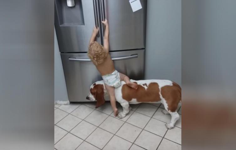 Tierisch gutes Team: Kleiner Junge und Basset