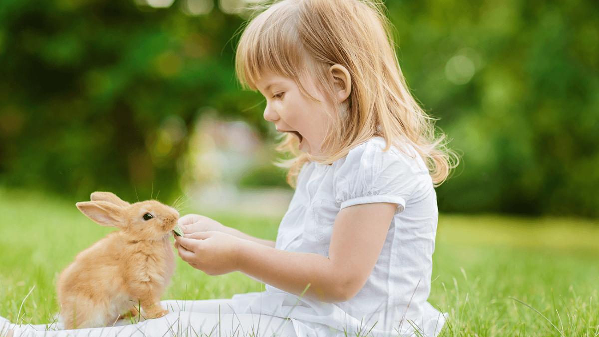 Welche Kleintiere eignen sich am besten für Kinder?