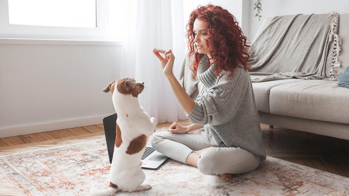Hundetraining 2.0 – Wie funktioniert Online-Training und ist es sinnvoll?