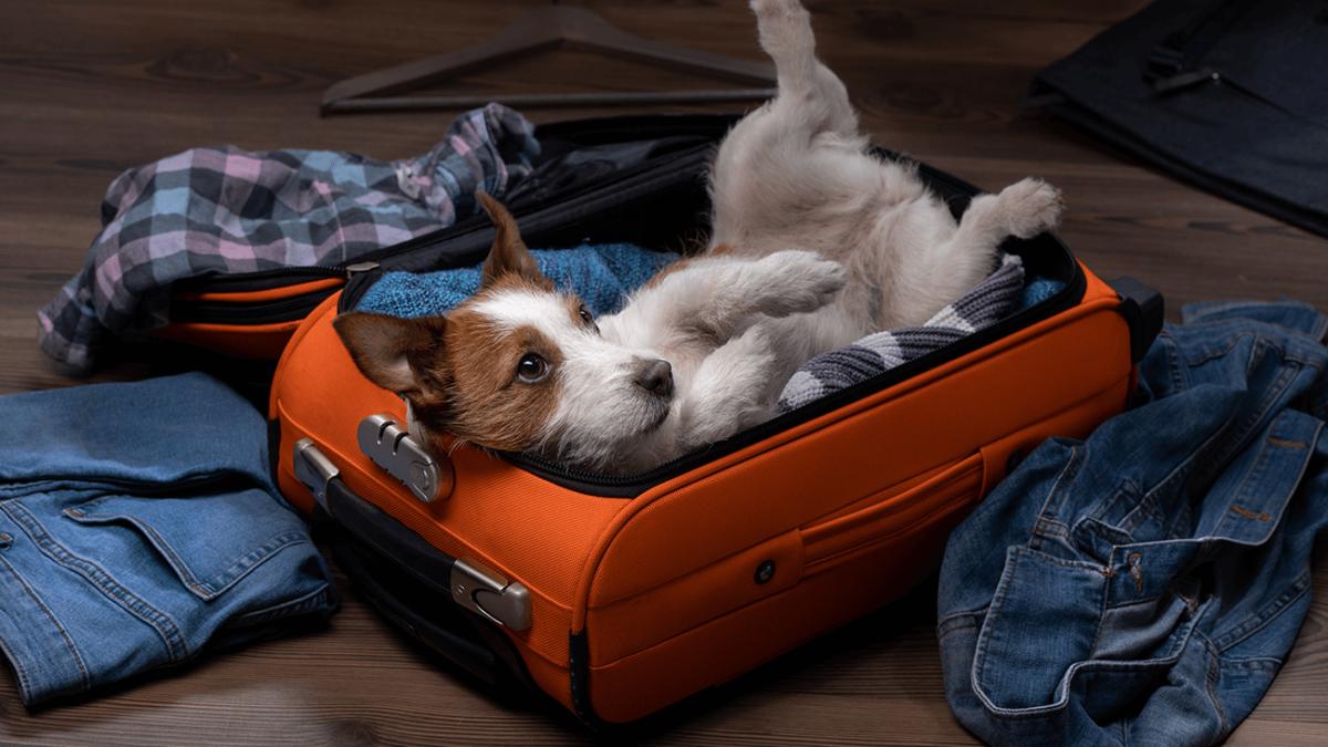 Hilfe, Haustiergeruch – Wie Du unangenehme Gerüche mühelos loswirst