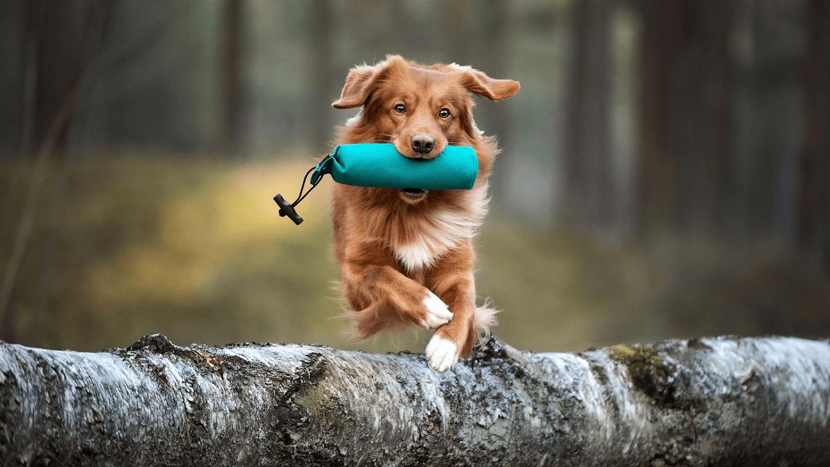 Hundeschulen öffnen nach dem Corona-Lockdown – Das musst Du jetzt beachten
