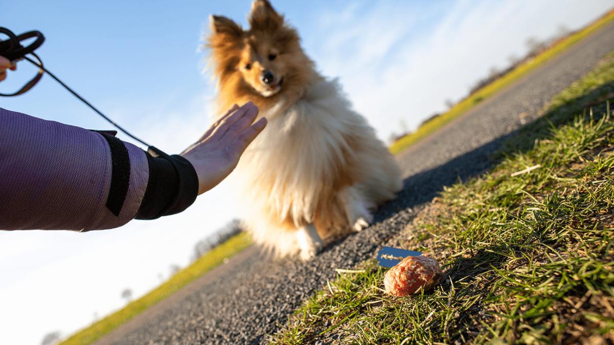 Anti-Giftköder-Training: So schützt Du Deinen Hund