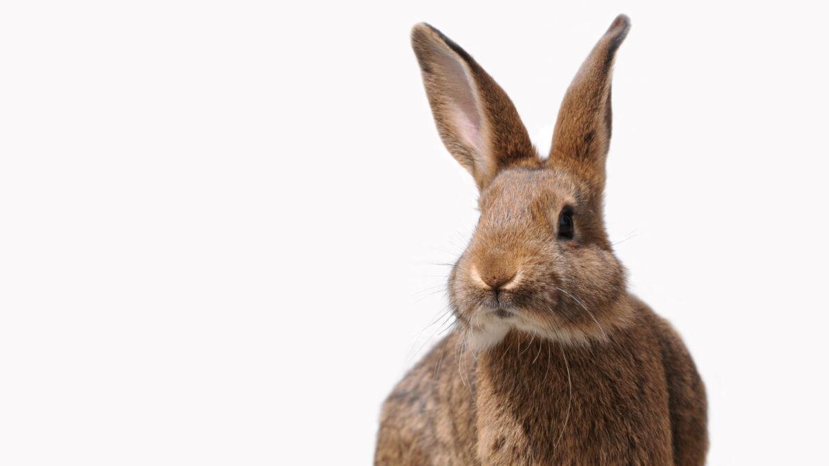 Kaninchen erfolgreich erziehen – So geht's