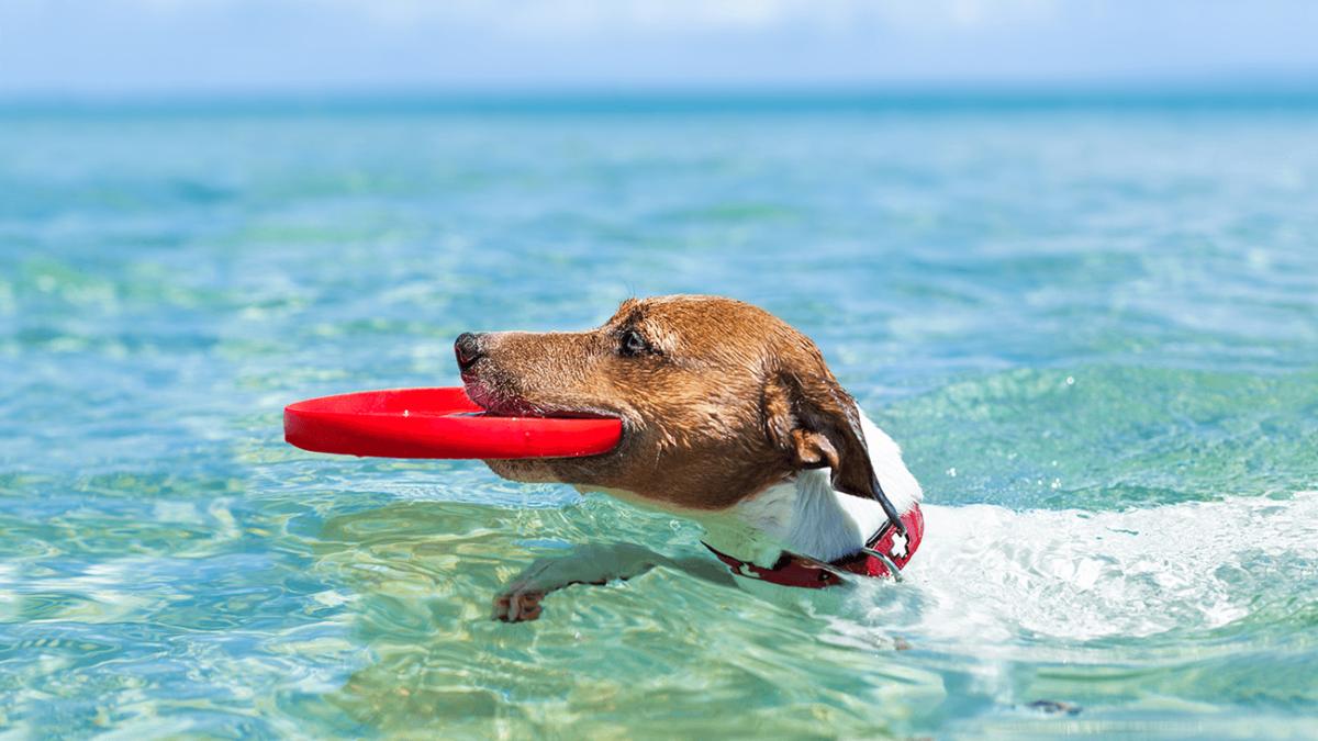 Aktiv mit Hund – Welche Hundesportarten gibt es?