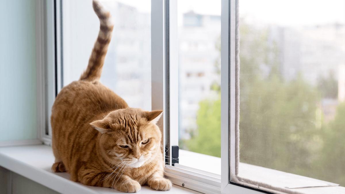 Garfield lässt grüßen – Wie setzte ich meine Katze richtig auf Diät?