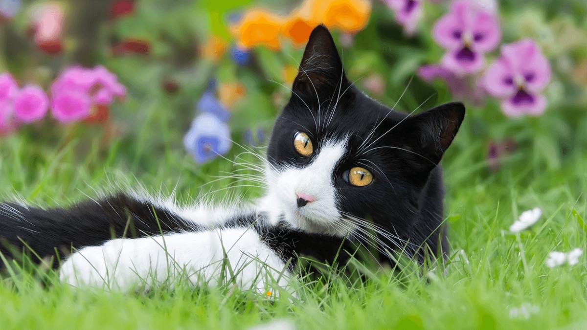 Tuxedo Cats – 007 im Auftrag ihrer Majestät