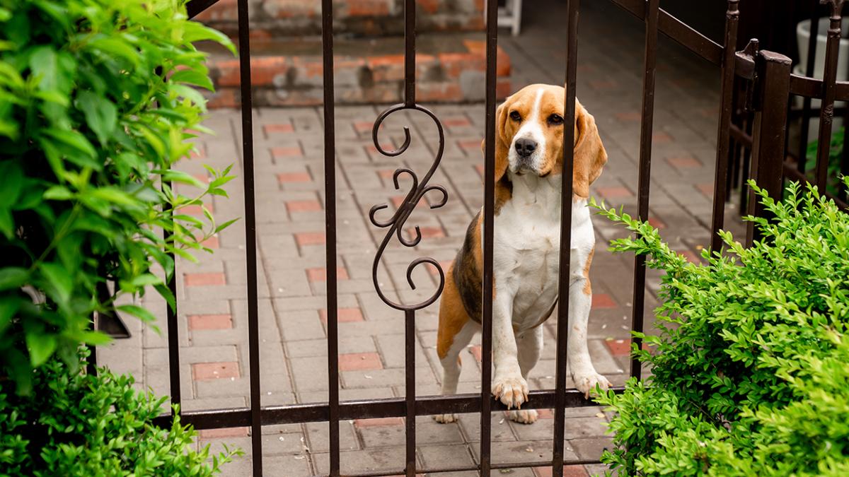 Keine Chance für Langfinger – Welche Hunde eignen sich als Wachhunde?