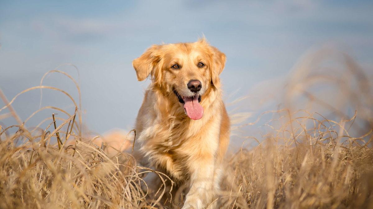 Allergien bei Hunden – Alles, was Du zu Symptomen und Behandlung wissen musst