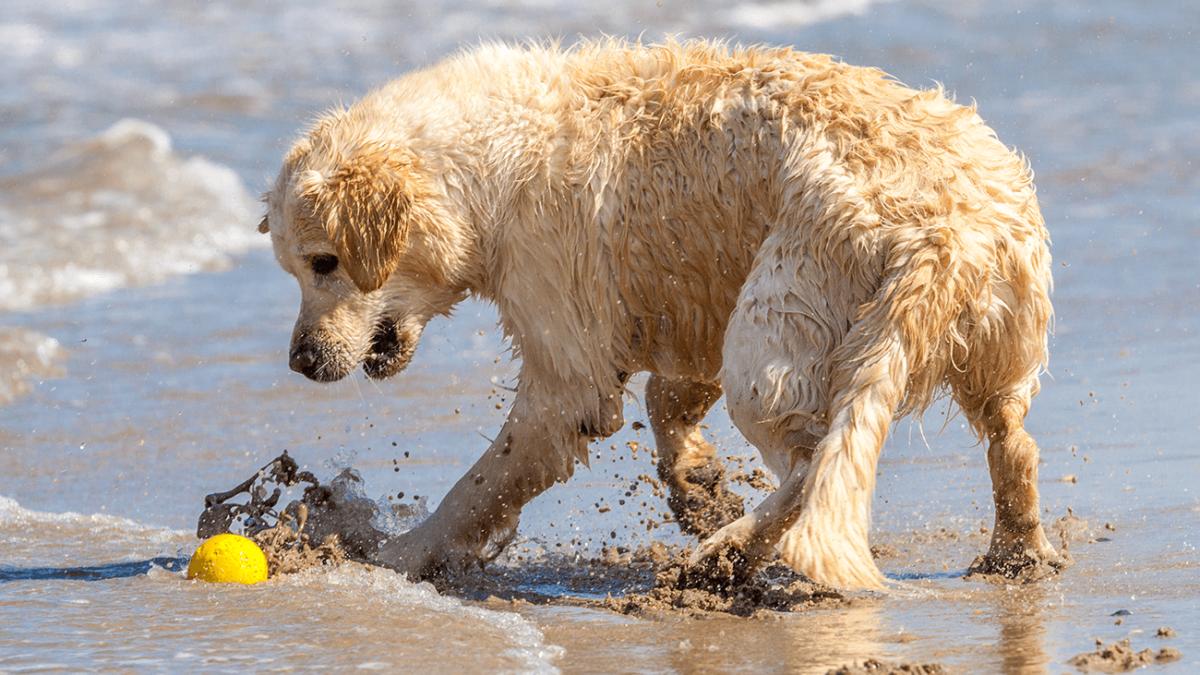 Unterschätzte Gefahr – Wasservergiftung bei Hunden