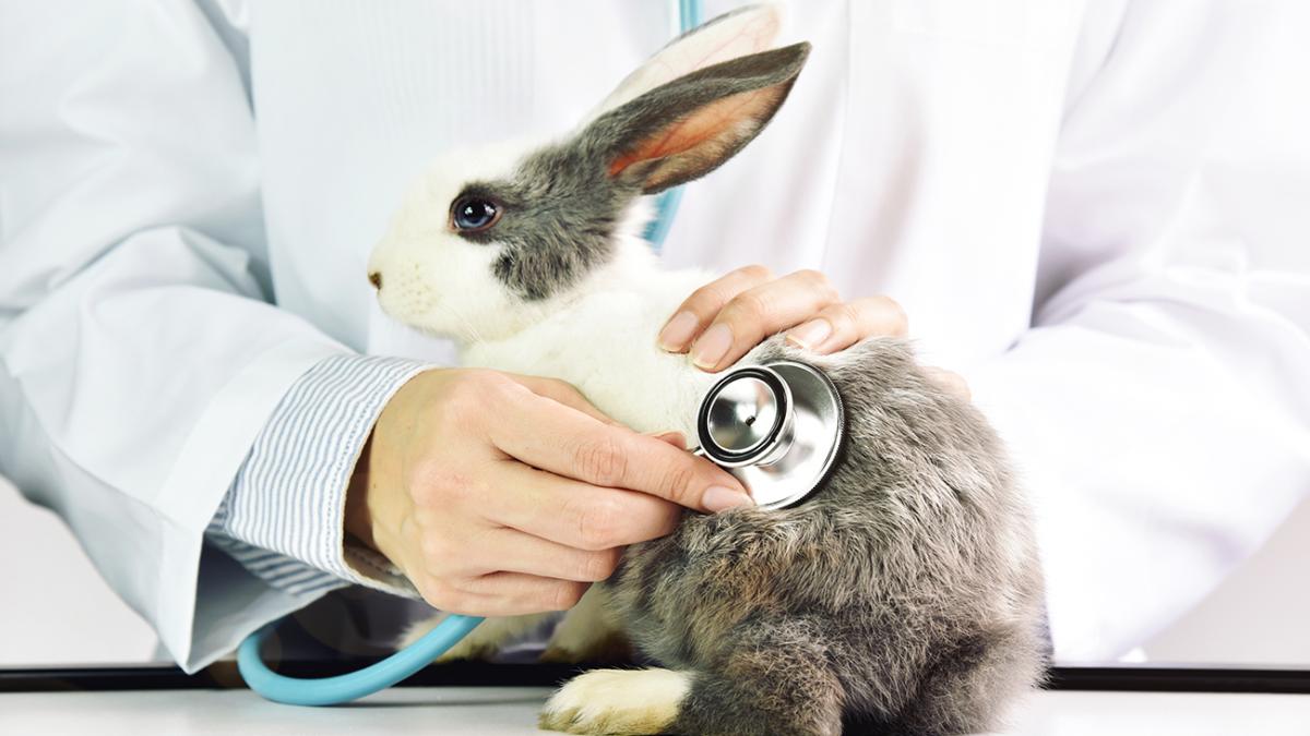 Enzephalitozoonose bei Kaninchen –  Infektion, Symptome und Behandlung