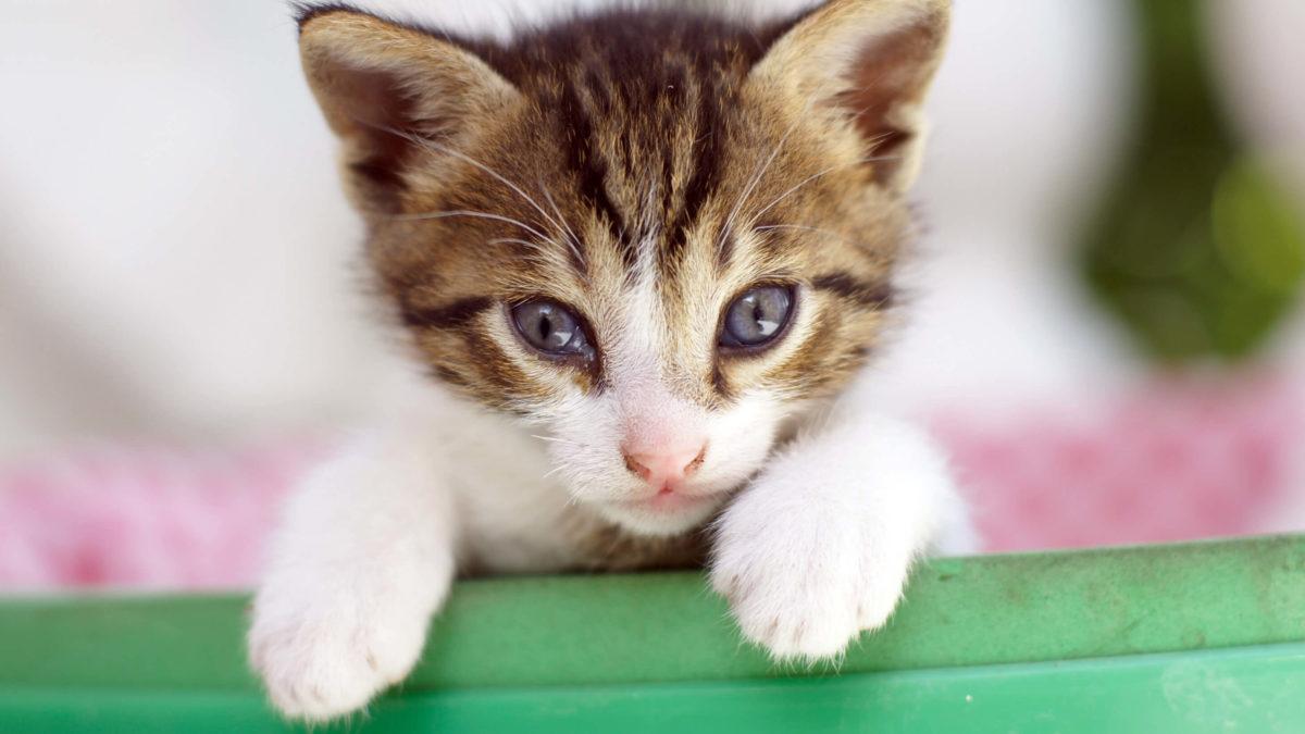 Hilfe, die Katzenbabys kommen – Was bei der Geburt und danach zu beachten ist