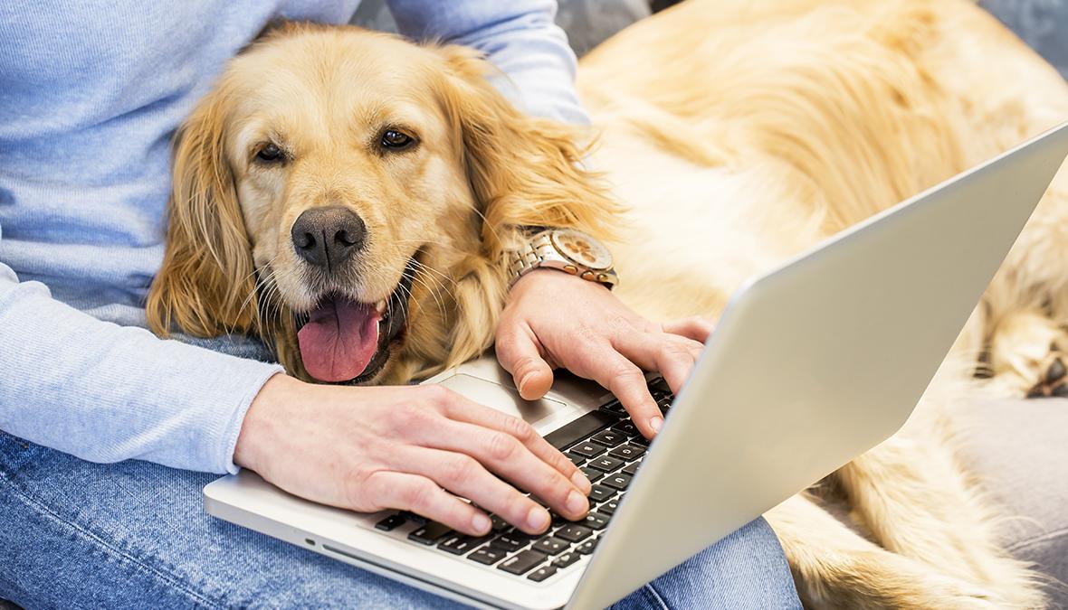 Home-Office mit Hund und Katze – So funktioniert es
