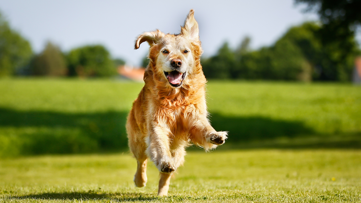 Haben Hunde wirklich einen siebten Sinn?