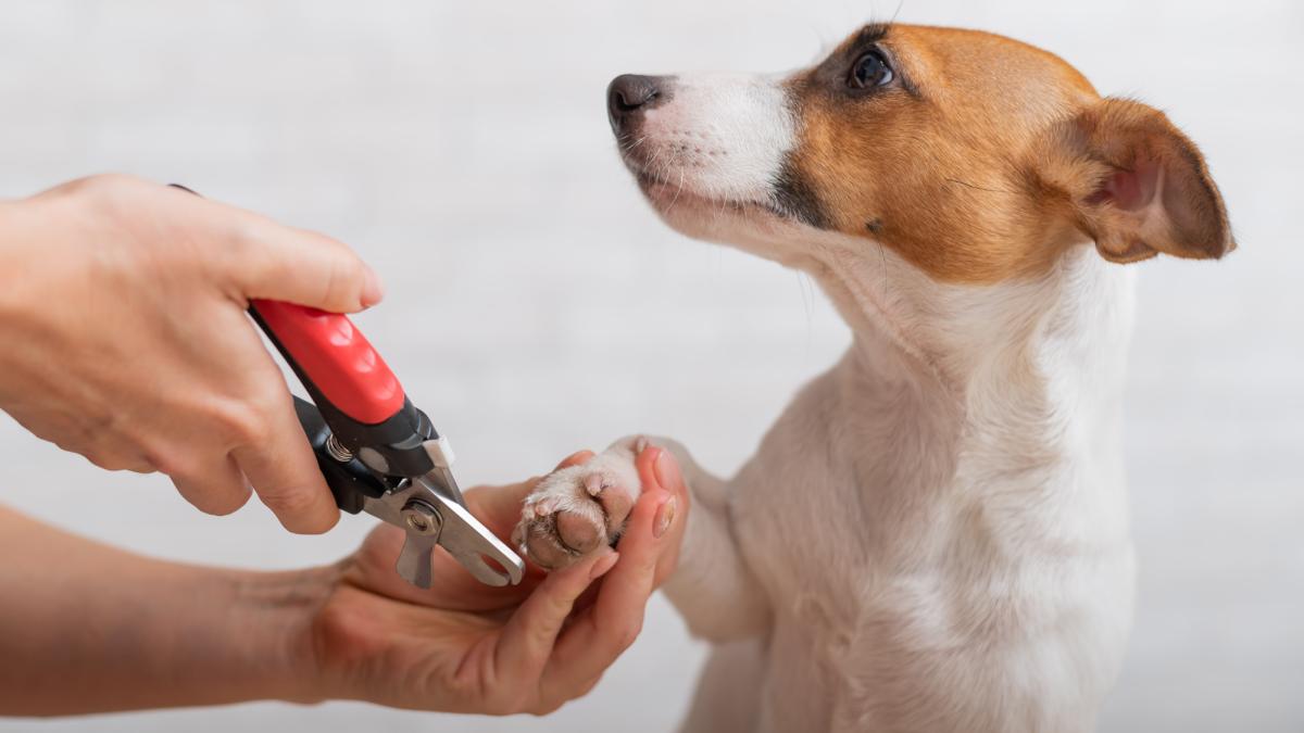 Hundekrallen schneiden: So geht es richtig