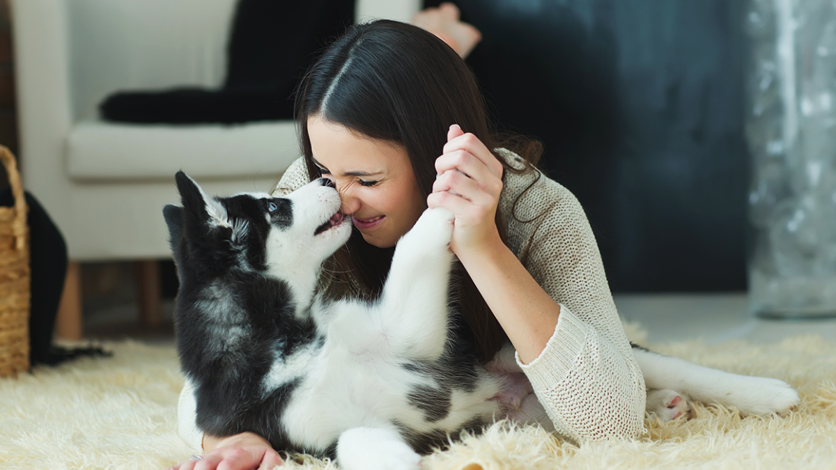 Mythos Hundespeichel – Sinnvolles Heilmittel oder lebensgefährlicher Leichtsinn?