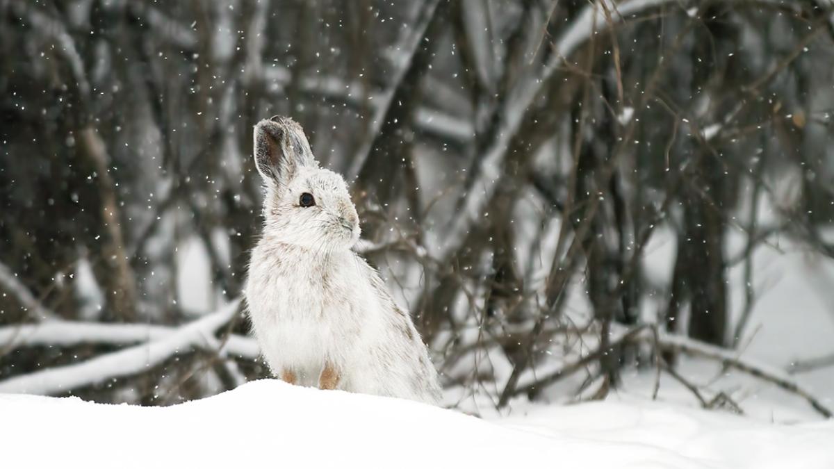 Kann ich meine Kaninchen auch im Winter draußen halten?