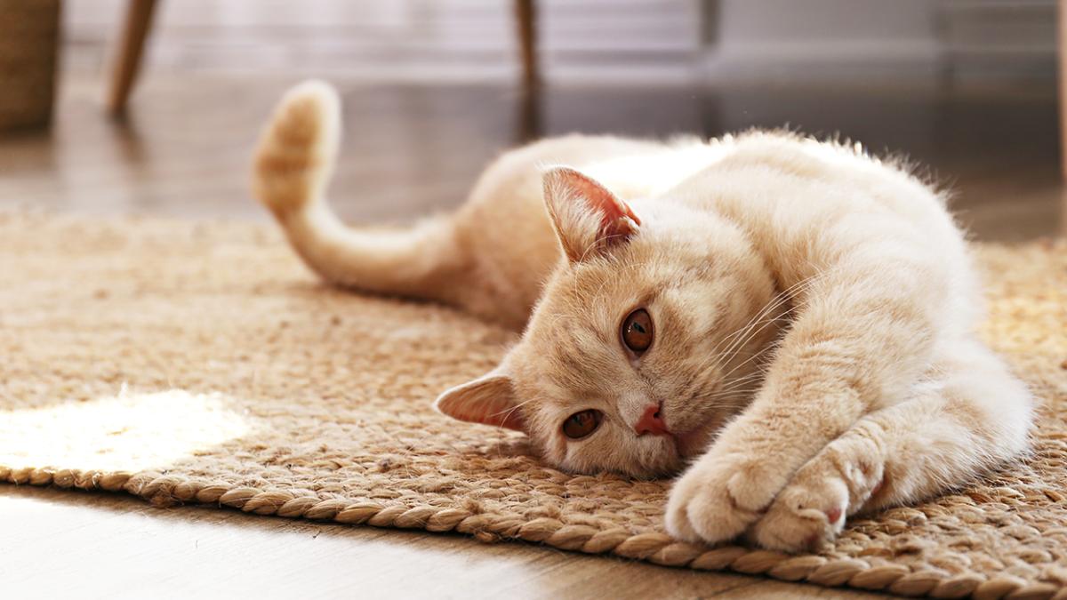Appetitlosigkeit bei Katzen – Ursachen, Maßnahmen und Prophylaxe