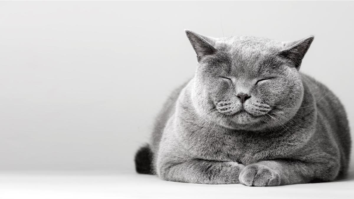 Bindehautentzündung bei Katzen – Ursachen, Symptome und Behandlung