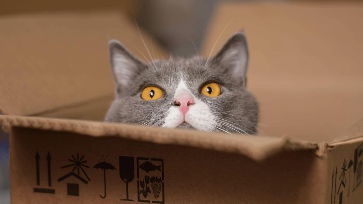 Revierwechsel auf vier Pfoten – So erleichterst Du Deiner Katze den Umzug