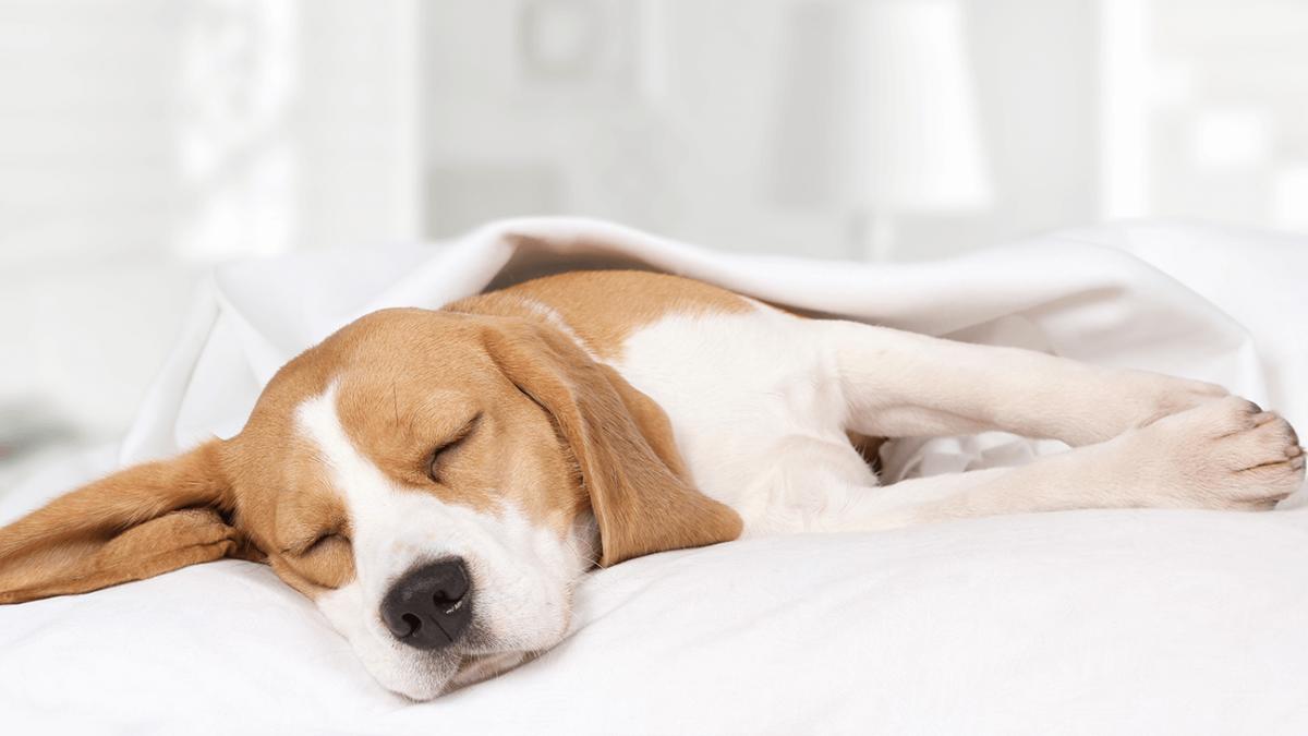 Tierischer Jetlag – Wie Du Deinem Hund die Zeitumstellung leichter machst