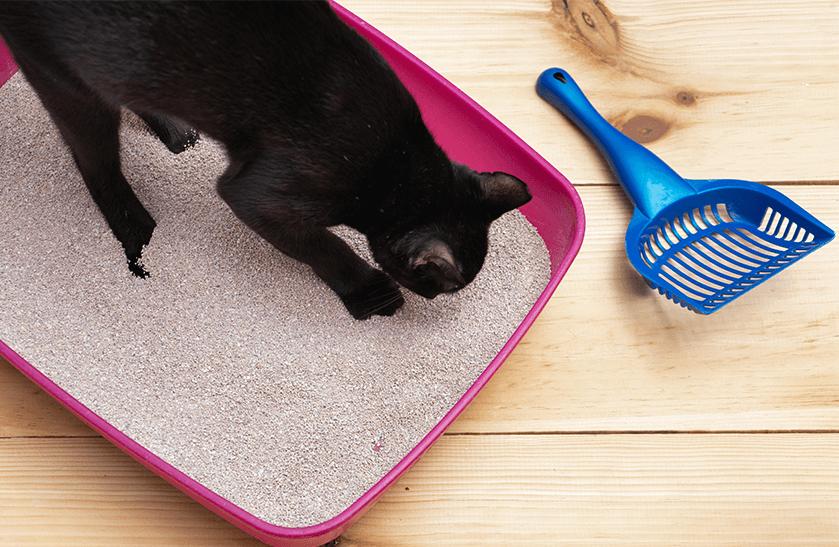 Streu ist nicht gleich Streu – Vor- und Nachteile verschiedener Katzenstreuarten